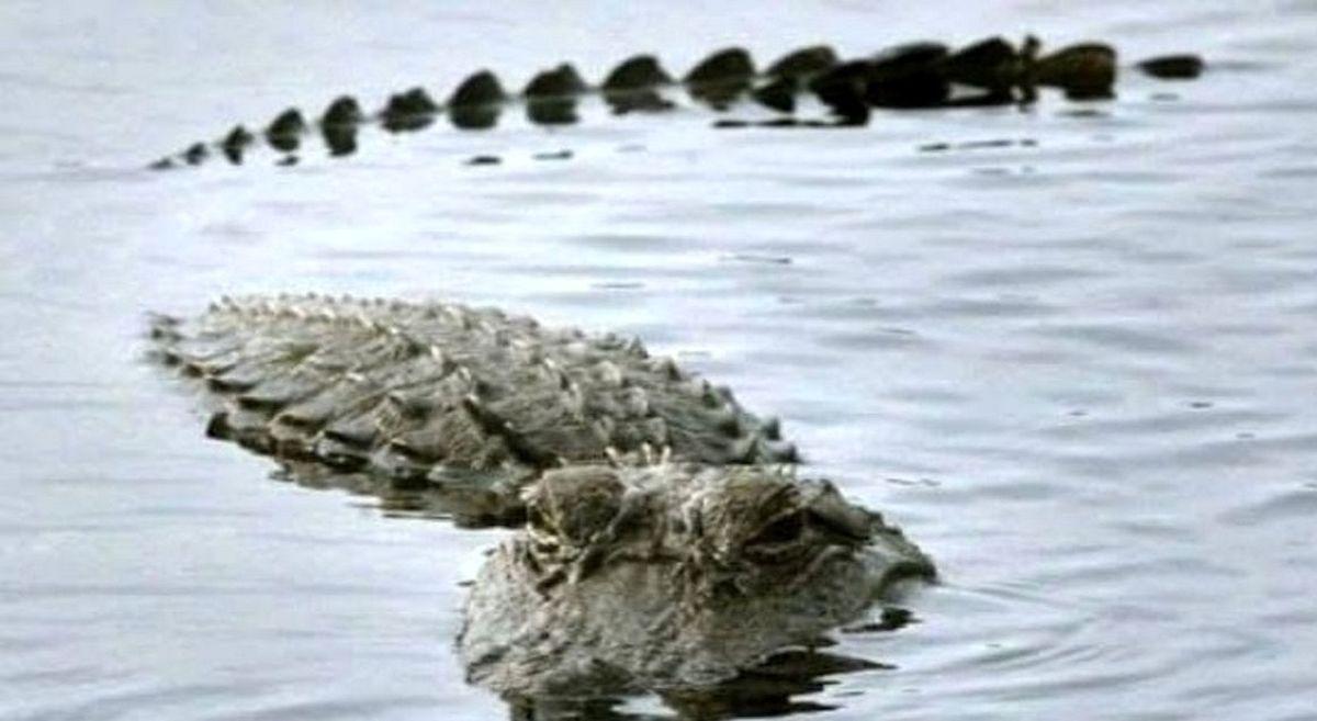 از تمساح دریاچه چیتگر چه خبر؟