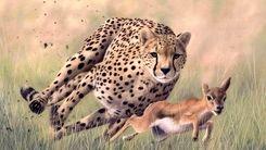 فرار زیرکانه یک آهو از چنگال کفتار و یوزپلنگ + فیلم دیدنی