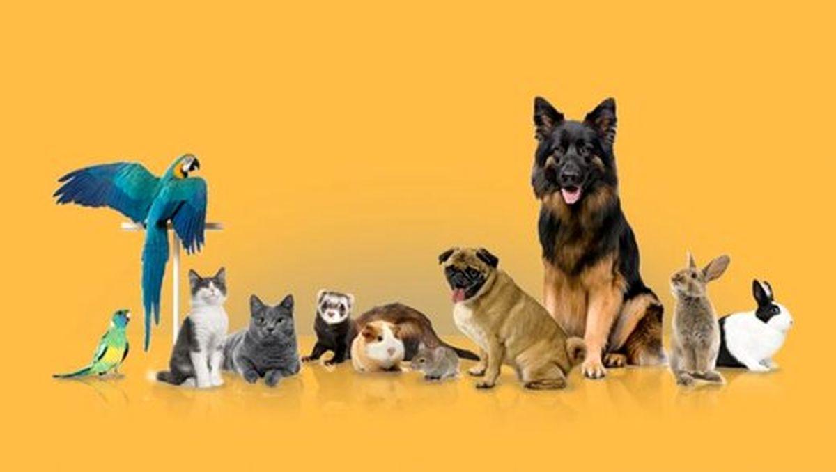 هزینه عجیب جراحی حیوانات خانگی/ سزارین چند؟